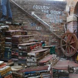 Księgarnia z kotami, która tonie w książkach – Alta Acqua Liberia